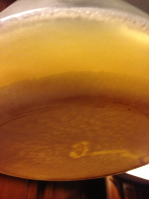 A layer of Conan forms after cold crashing our 400 ml step of 1.030 wort.