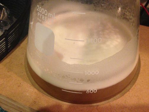 Conan is very active as soon as we add ~700 ml of 1.035 wort for our third step.