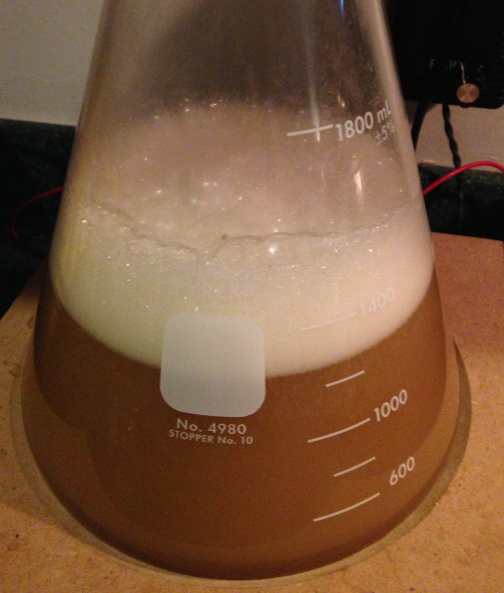 Conan rages in our final step of ~1200 ml 1.040 wort.